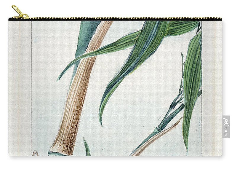 1870s Carry-all Pouch featuring the photograph Japan: Bamboo, C1870s by Granger