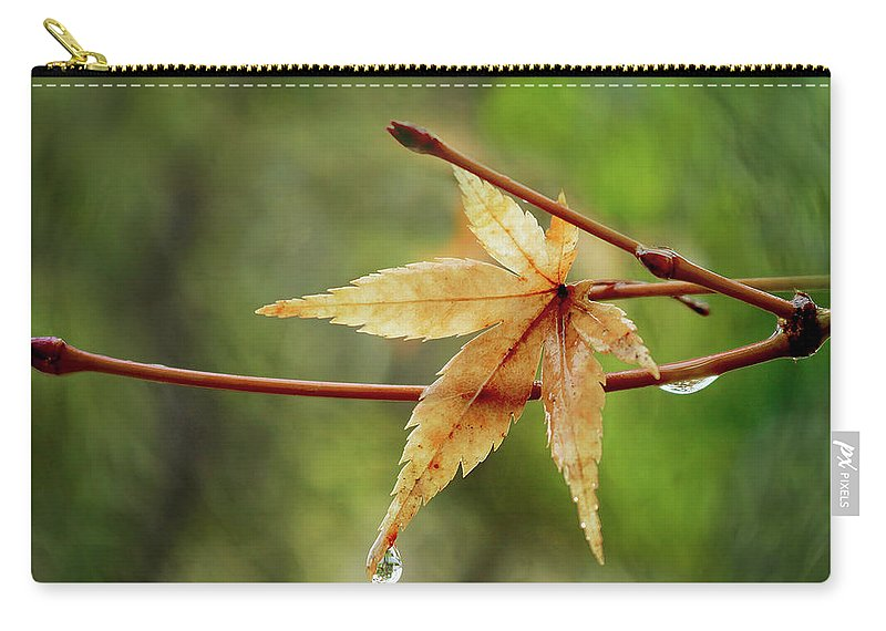 Japanese Maple Carry-all Pouch featuring the photograph Japanese Maple In The Rain by Erin Donalson
