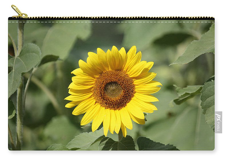 Jarrettsville Carry-all Pouch featuring the photograph Jarrettsville Sunflowers - The Star Of The Show by Ronald Reid