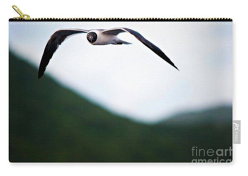 Seagull Carry-all Pouch featuring the photograph Jonathon Livingston Seagull by Doug Sturgess