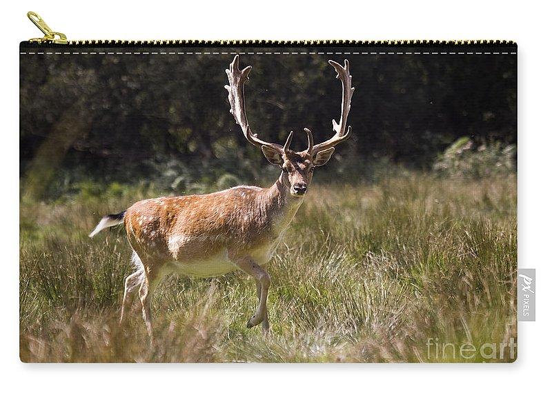 Fallow Deer Carry-all Pouch featuring the photograph Jump Jump by Angel Ciesniarska