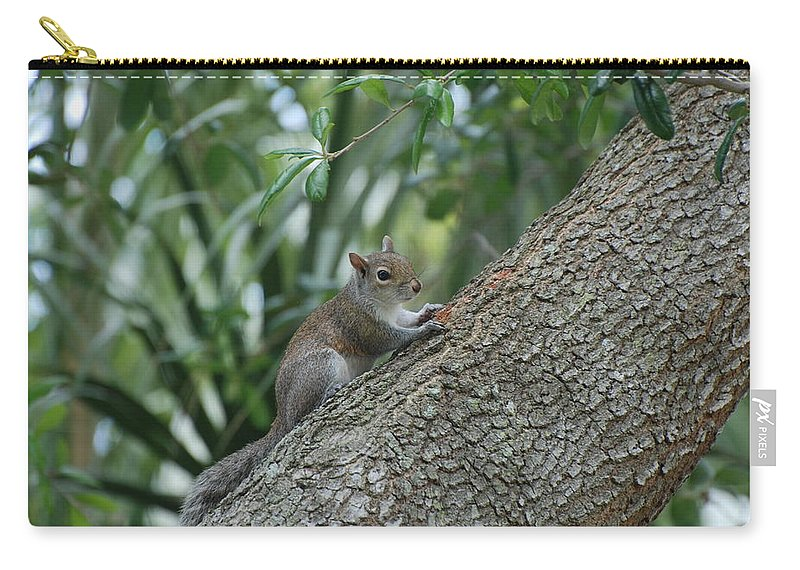 Squirrels Carry-all Pouch featuring the photograph Just Chilling Out by Rob Hans