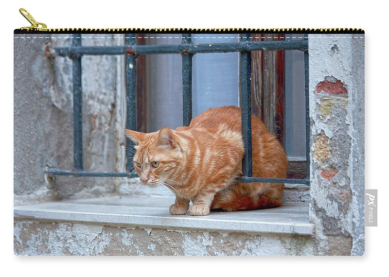 Animal Carry-all Pouch featuring the photograph Just Curious Cat by Heiko Koehrer-Wagner