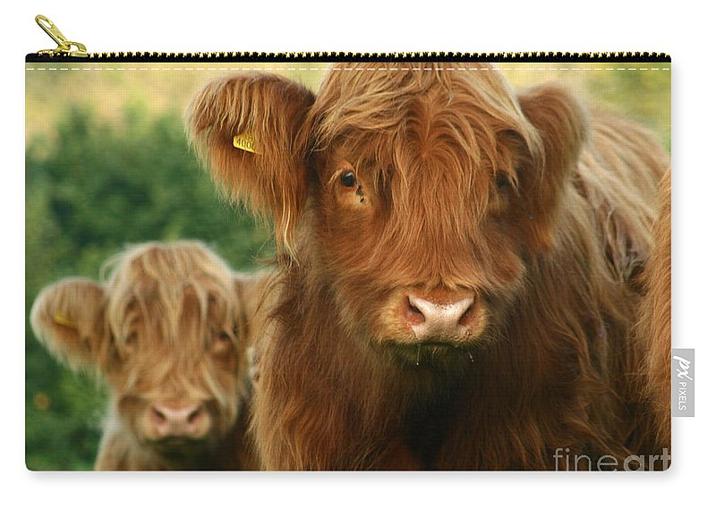 Cow Carry-all Pouch featuring the photograph Just Like Teddy Bears by Angel Ciesniarska