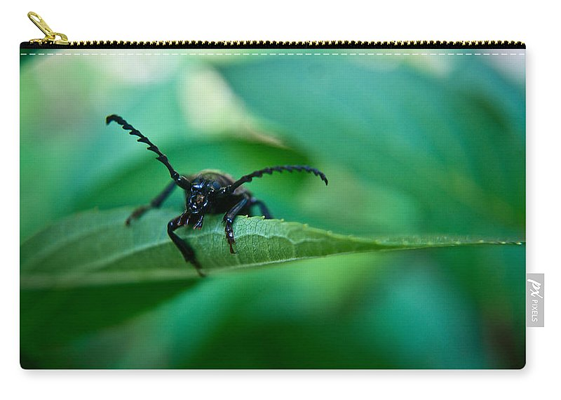 Beetle Carry-all Pouch featuring the photograph Just Looking For Another Beetle by Douglas Barnett