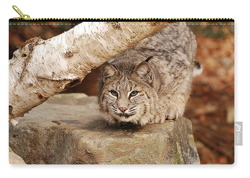 Bobcat Carry-all Pouch featuring the photograph Just Thinking by Lori Tambakis