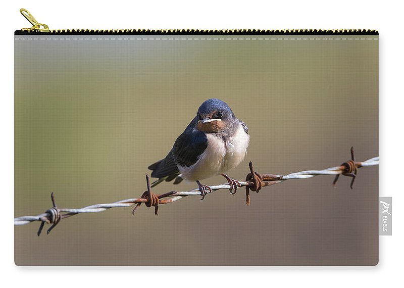 Barn Carry-all Pouch featuring the photograph Juvenile Barn Swallow Landscape by Peter Walkden