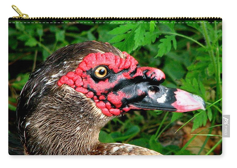 Duck Carry-all Pouch featuring the photograph Juvenile Muscovy Duck by J M Farris Photography