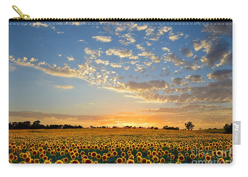 Sunflowers Carry-all Pouch featuring the photograph Kansas Sunflowers At Sunset by Catherine Sherman