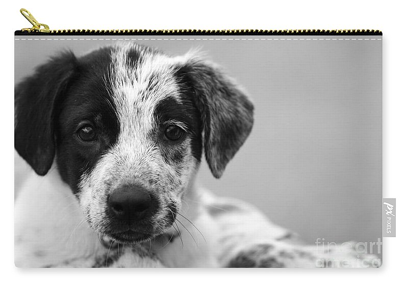 Dog Carry-all Pouch featuring the photograph Keep Me by Amanda Barcon