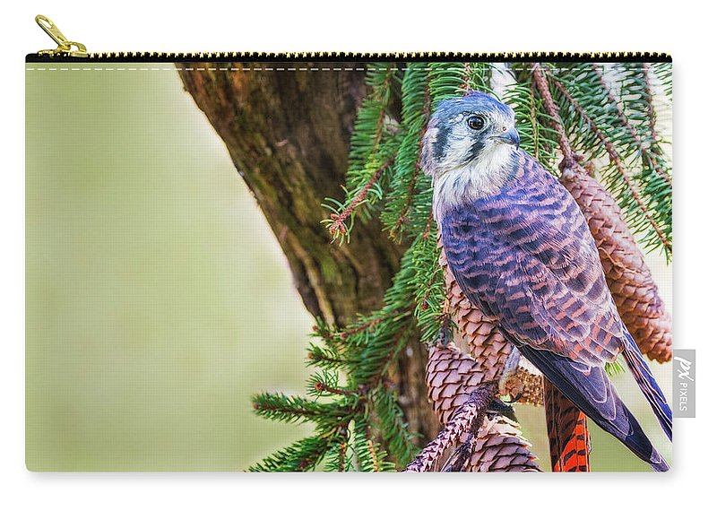 Kestrel Falcon Carry-all Pouch featuring the photograph Kestrel On The Cones by Peg Runyan