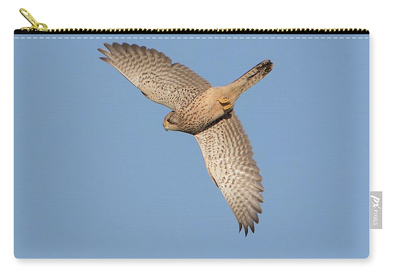 Kestrel Carry-all Pouch featuring the photograph Kestrel by Peter Walkden