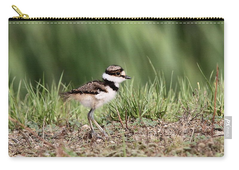 Nature Carry-all Pouch featuring the photograph Killdeer - 24 Hours Old by Travis Truelove