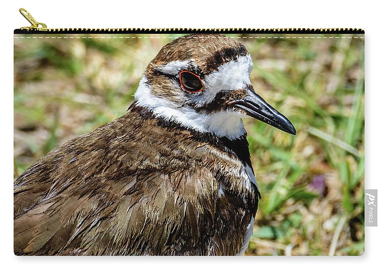 Birds Of South Texas Carry-all Pouch featuring the photograph Killdeer Profile by Debra Martz