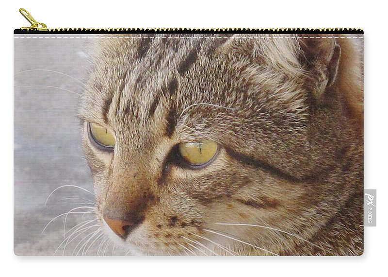 Cat Carry-all Pouch featuring the photograph King Cat by Ian MacDonald