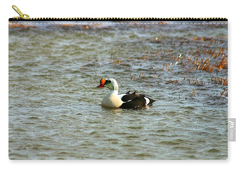 King Eider Carry-all Pouch featuring the photograph King Eider by Anthony Jones