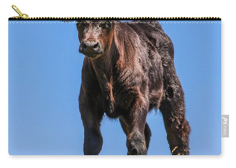 Calf Carry-all Pouch featuring the photograph King Of The Hill by Peter Bouman
