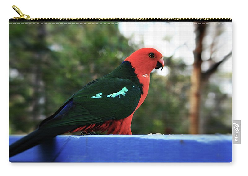 King Parrot Carry-all Pouch featuring the photograph King Of The Parrots by Douglas Barnard