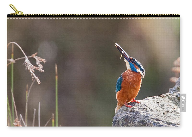 Kingfisher Carry-all Pouch featuring the photograph Kingfisher With Fish by Bob Kemp
