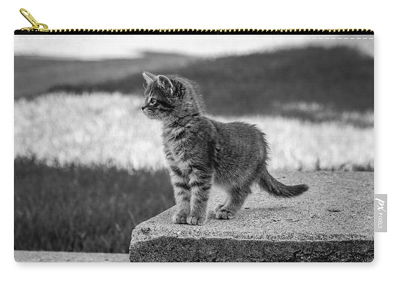 Kitten Carry-all Pouch featuring the photograph Kitten 2 by Chad Rowe
