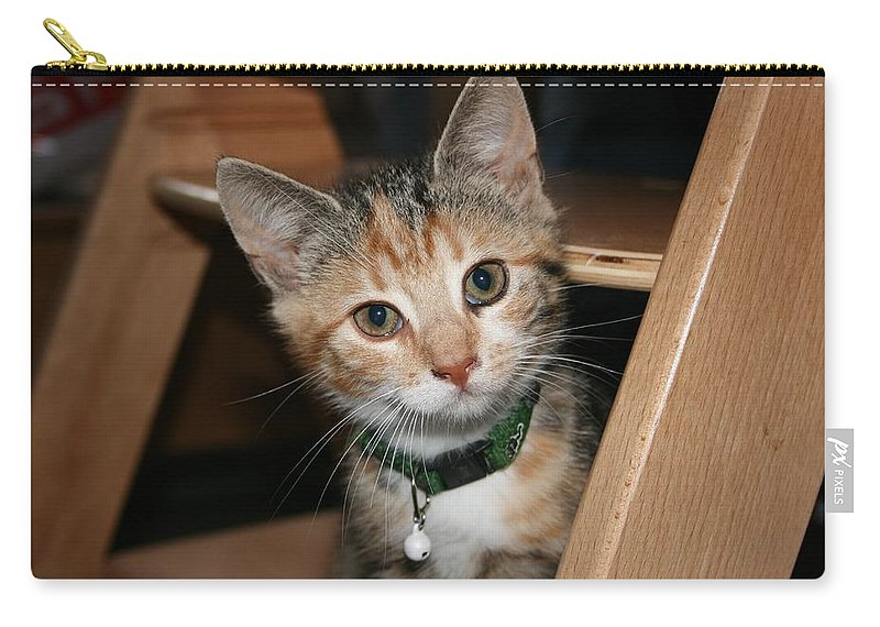 Cat Carry-all Pouch featuring the photograph Kitten by Steve K