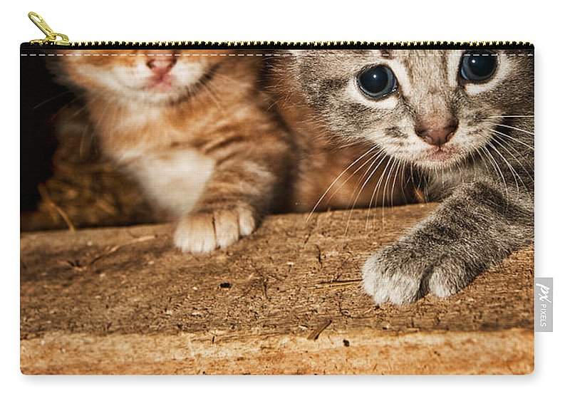 Kittens Carry-all Pouch featuring the photograph Kittens by Amber Flowers