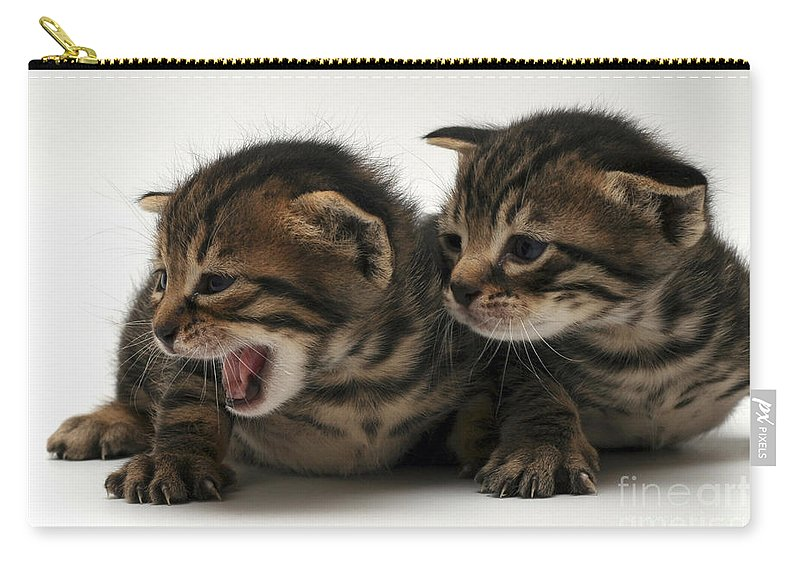 Cat Carry-all Pouch featuring the photograph Kittens by Yedidya yos mizrachi