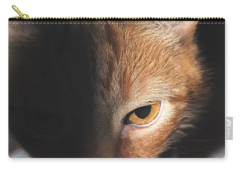 Cat Carry-all Pouch featuring the photograph Kitty by Jost Houk