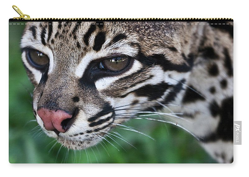 Nature Carry-all Pouch featuring the photograph Kitty Ocelot 1 by Heiko Koehrer-Wagner