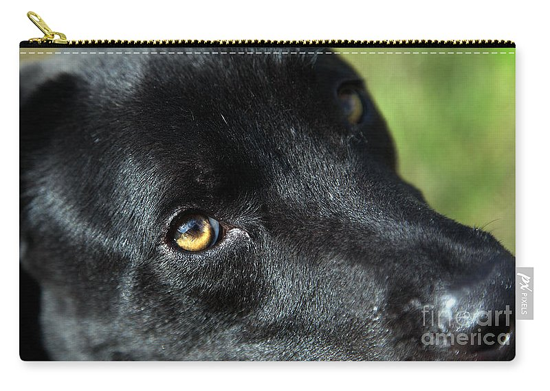 Lab Carry-all Pouch featuring the photograph Lab Mix by Amanda Barcon