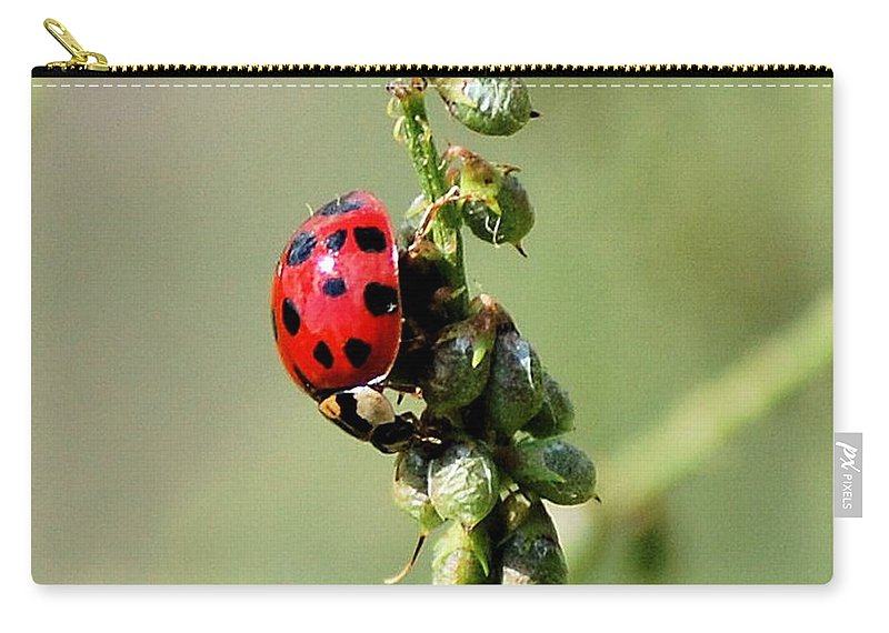 Landscape Carry-all Pouch featuring the photograph Lady Beetle by David Lane