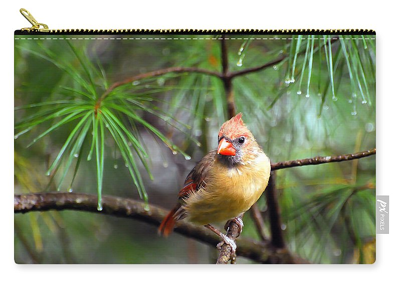 Female Cardinal Carry-all Pouch featuring the photograph Lady In The Rain by Kerri Farley