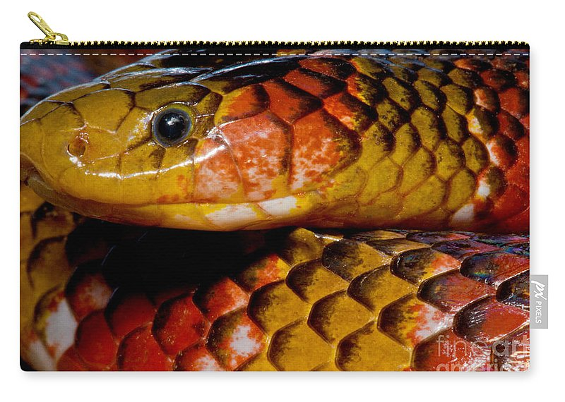 Langsdorf�s Coralsnake Carry-all Pouch featuring the photograph Langsdorfs Coralsnake by Dant� Fenolio