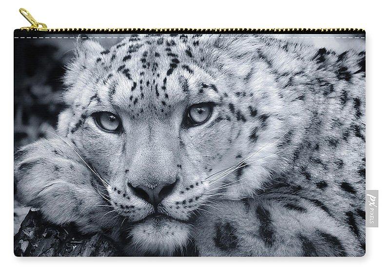 Snow Leopard Carry-all Pouch featuring the photograph Large Snow Leopard Portrait by Chris Boulton