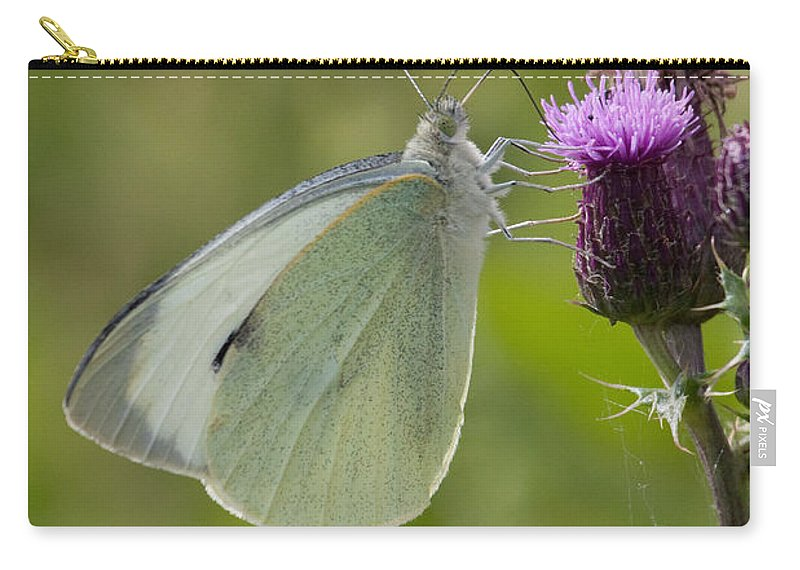 Butterfly Carry-all Pouch featuring the photograph Large White Butterfly On Thistle by Bob Kemp