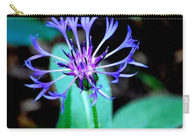 Digital Photograph Carry-all Pouch featuring the photograph Last Flower In The Garden by David Lane