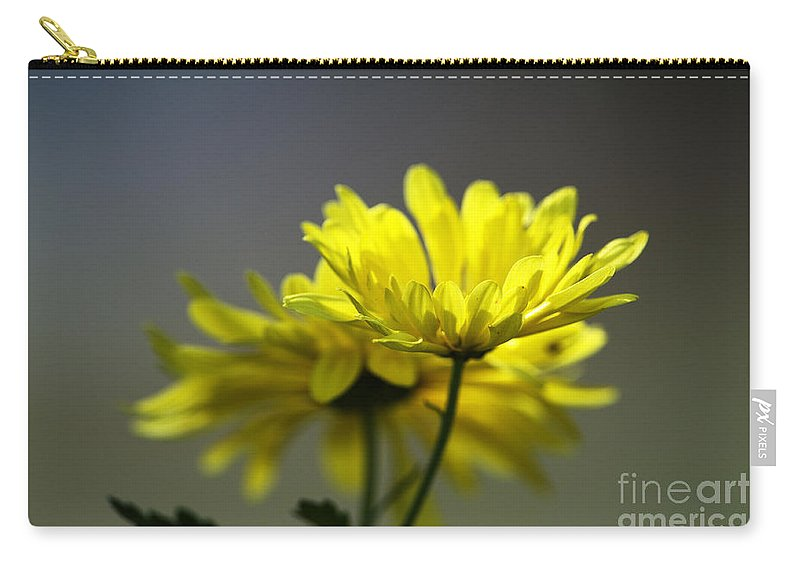 Mums Carry-all Pouch featuring the photograph Last Rays by Sharon Talson