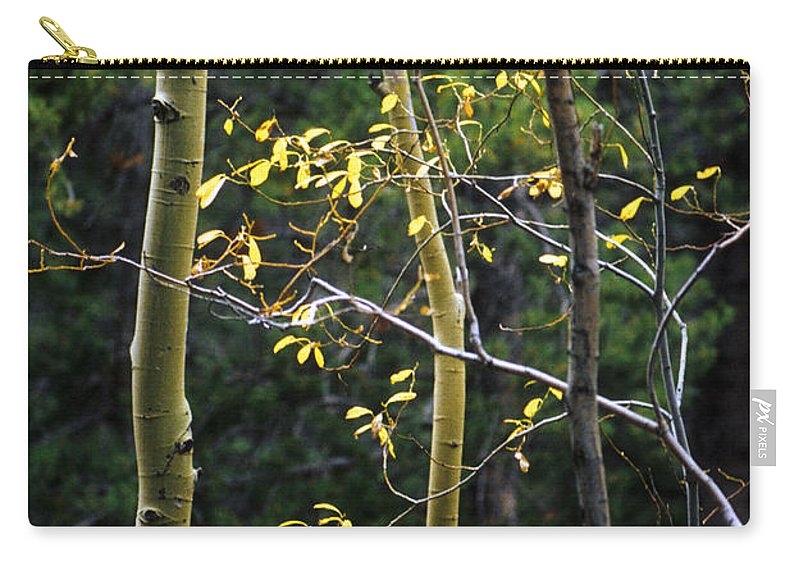 Aspen Carry-all Pouch featuring the photograph Late Aspen by Jerry McElroy
