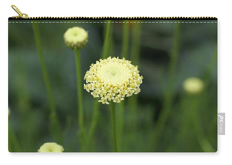 Flower Carry-all Pouch featuring the photograph Lavender Cotton by Heidi Poulin