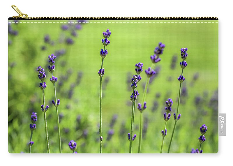 Lavender Carry-all Pouch featuring the photograph Lavender Spikes by Robert Anastasi