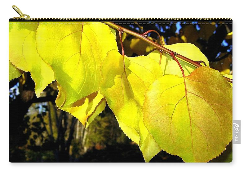 Apricot Leaves Carry-all Pouch featuring the photograph Leaf Line by Will Borden