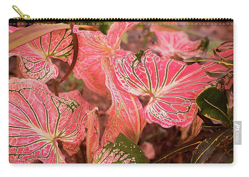 Flower Carry-all Pouch featuring the photograph Leaf Of Color by Sacksith Vorlachith