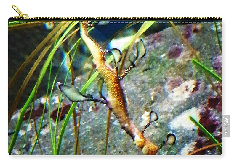 Paintings Carry-all Pouch featuring the photograph Leafy Sea Dragon by Anthony Jones