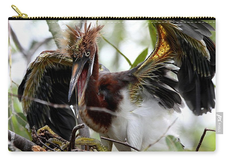Tri-colored Heron Carry-all Pouch featuring the photograph Learning To Fly by Barbara Bowen