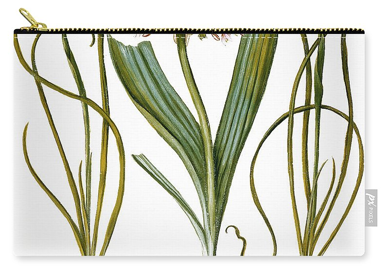 1613 Carry-all Pouch featuring the photograph Leek And Irises, 1613 by Granger
