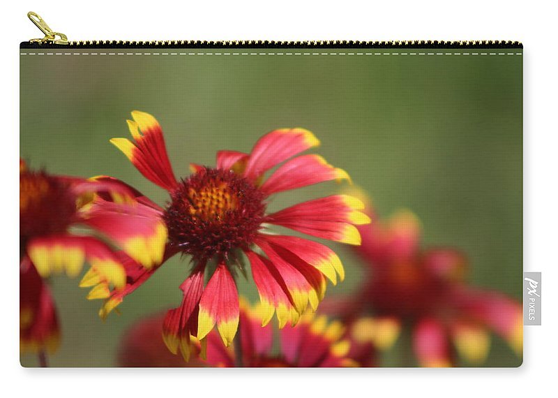 Coneflower Carry-all Pouch featuring the photograph Lemon Yellow and Candy Apple Red Coneflower by Colleen Cornelius