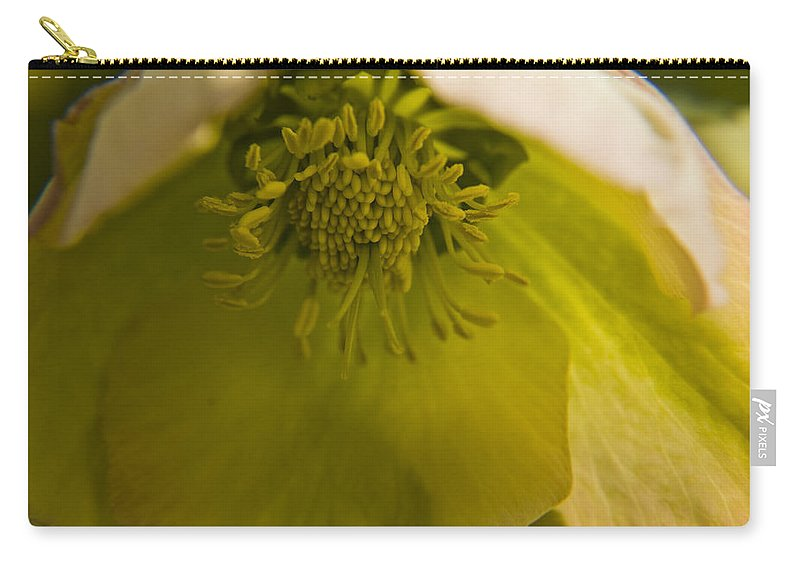 Flower Carry-all Pouch featuring the photograph Lenten Rose Interior by Teresa Mucha