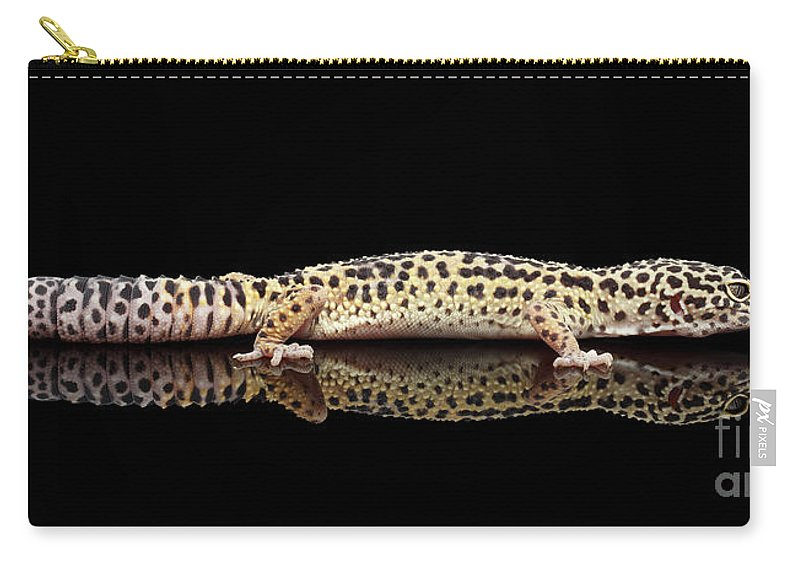 Gecko Carry-all Pouch featuring the photograph Leopard Gecko Eublepharis Macularius Isolated On Black Background by Sergey Taran