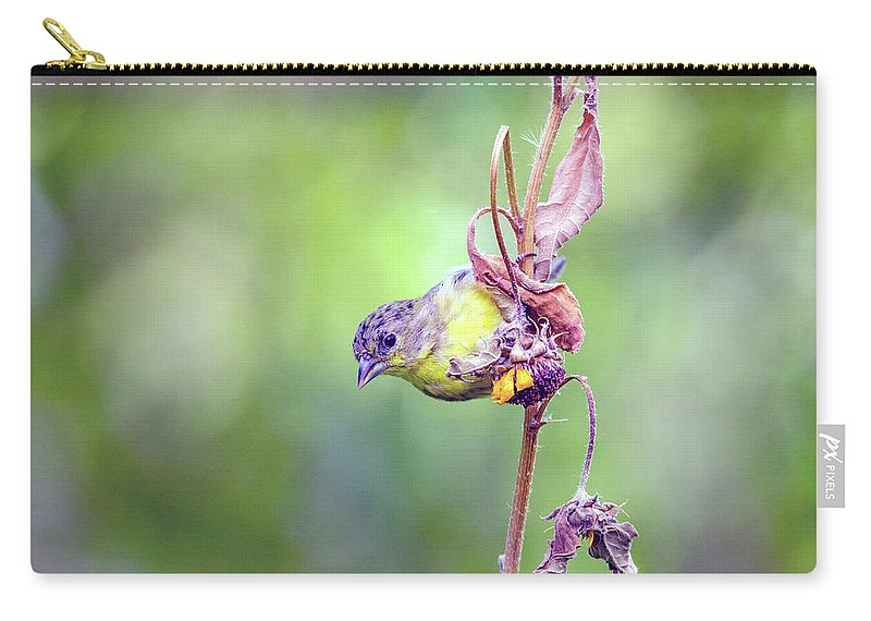 Lesser Carry-all Pouch featuring the photograph Lesser Goldfinch 4052 by Tam Ryan