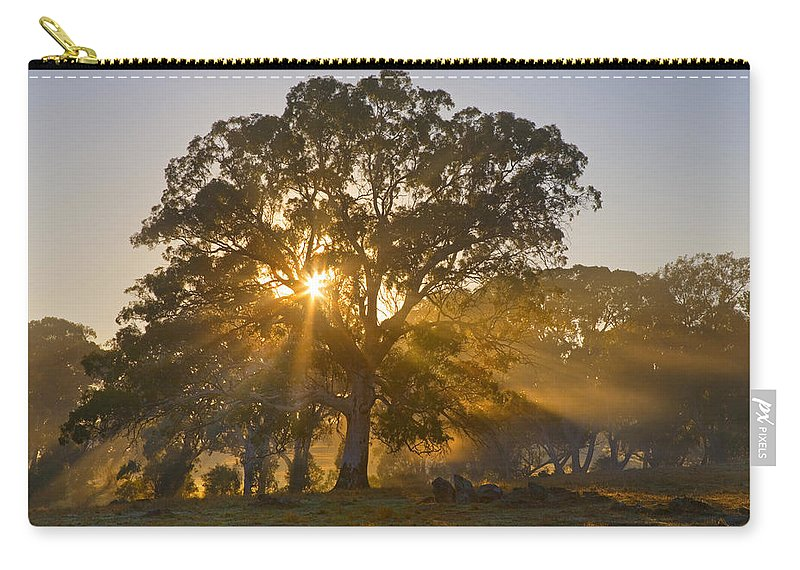 Tree Carry-all Pouch featuring the photograph Let There Be Light by Mike Dawson